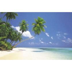 Morgen på Maldiverne, MAXI...