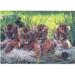 Tigerunger, MAXI plakat...