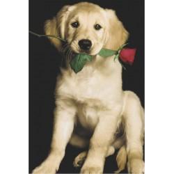 Casanova - hund med rose,...