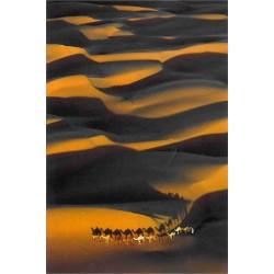 Karavane i ørkenen (Desert...