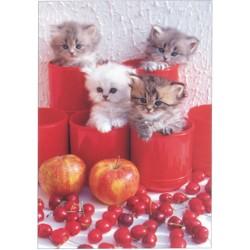 Killinger og bær (Kittens...