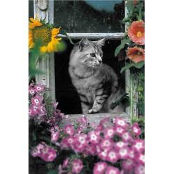 Kat i vindue, MAXI plakat...