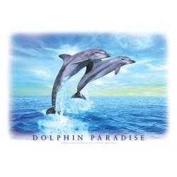Dolphin Paradise, Delfiner,...
