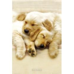 Sovende hundehvalpe, MAXI...