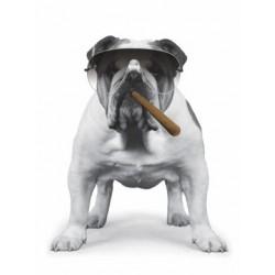 Hund med cigar og...