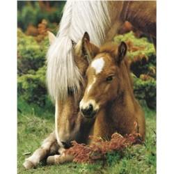 Heste - hoppe og føl (Midi...