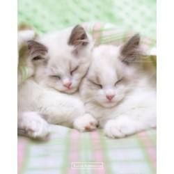 Søvnige katte (Midi plakat)