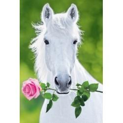 Hvid hest med rose