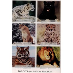Store kattedyr - Dyrenes...