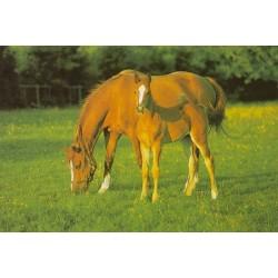 Hest med føl