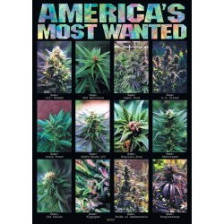 America's Most Wanted...
