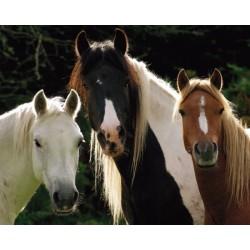 Tre heste (Midi plakat)
