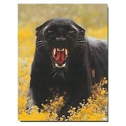 Snerrende sort panter (Midi...