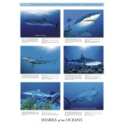 Sharks of the Oceans...