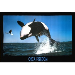 Orca Freedom - Spækhugger