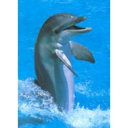Springende delfin (Midi...