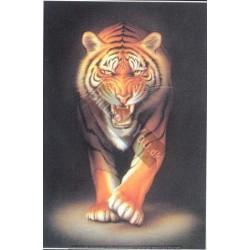 Aquarius - Tiger, MAXI...