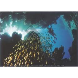 Undervandsfoto - Dykker og...